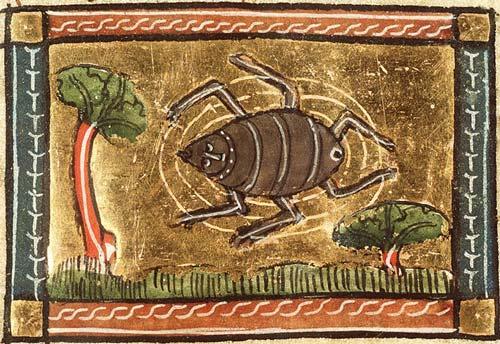 Medieval manuscript image of a six-legged spider.