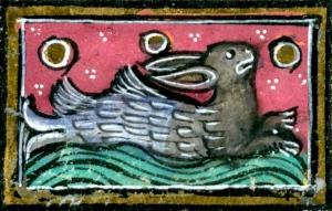 sea rabbit