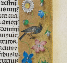 starling-f244r-huth-hours-bl