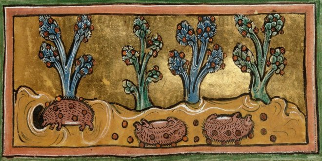 Medieval manuscript image of three hedgehogs rolling on the ground, using their quills to collect the fruit that has fallen from plants.