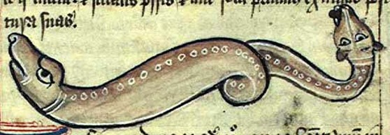 Amphisbaena in medieval bestiary