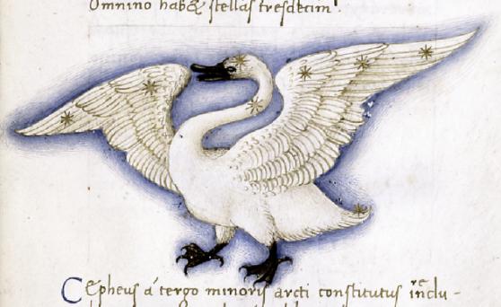 medieval_swan_3