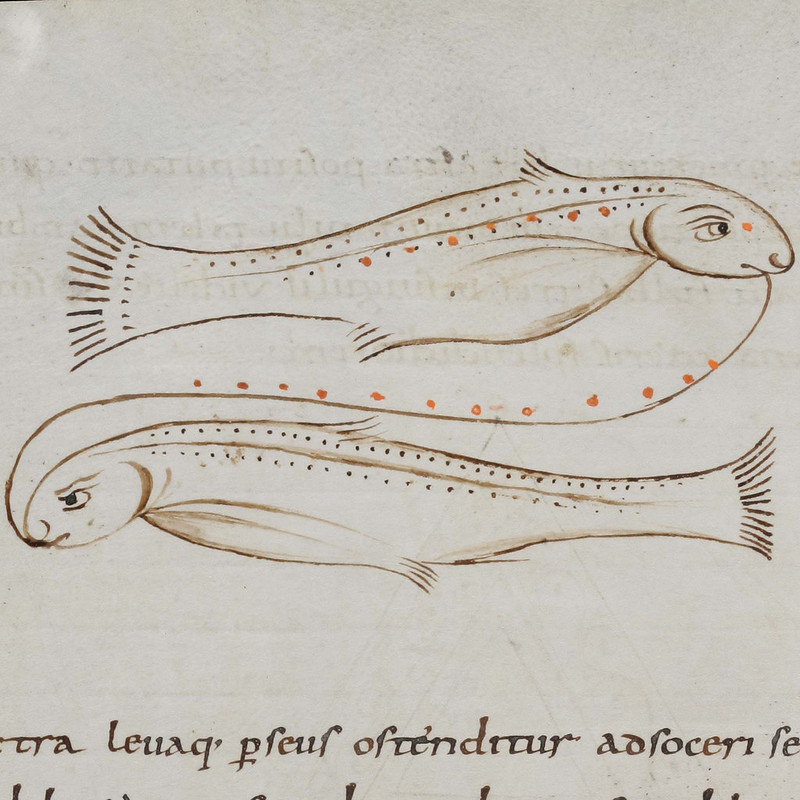 Medieval manuscript image of two fish facing opposite directions, connected mouth-to-mouth by a curving line.