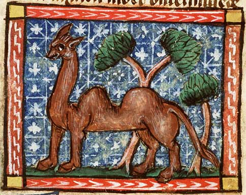 Medieval manuscript image of a brown, two-humped camel, with a couple of trees in the background.