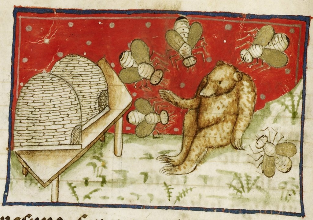 Medieval manuscript image of a bear surrounded by five giant bees, with two hives on a table.