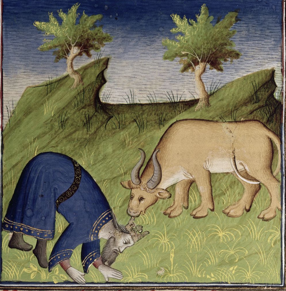Medieval manuscript image of a king bent over next to a cow, both of them eating grass.