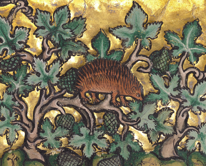 Medieval manuscript image of a hedgehog surrounded by vines with fruits.