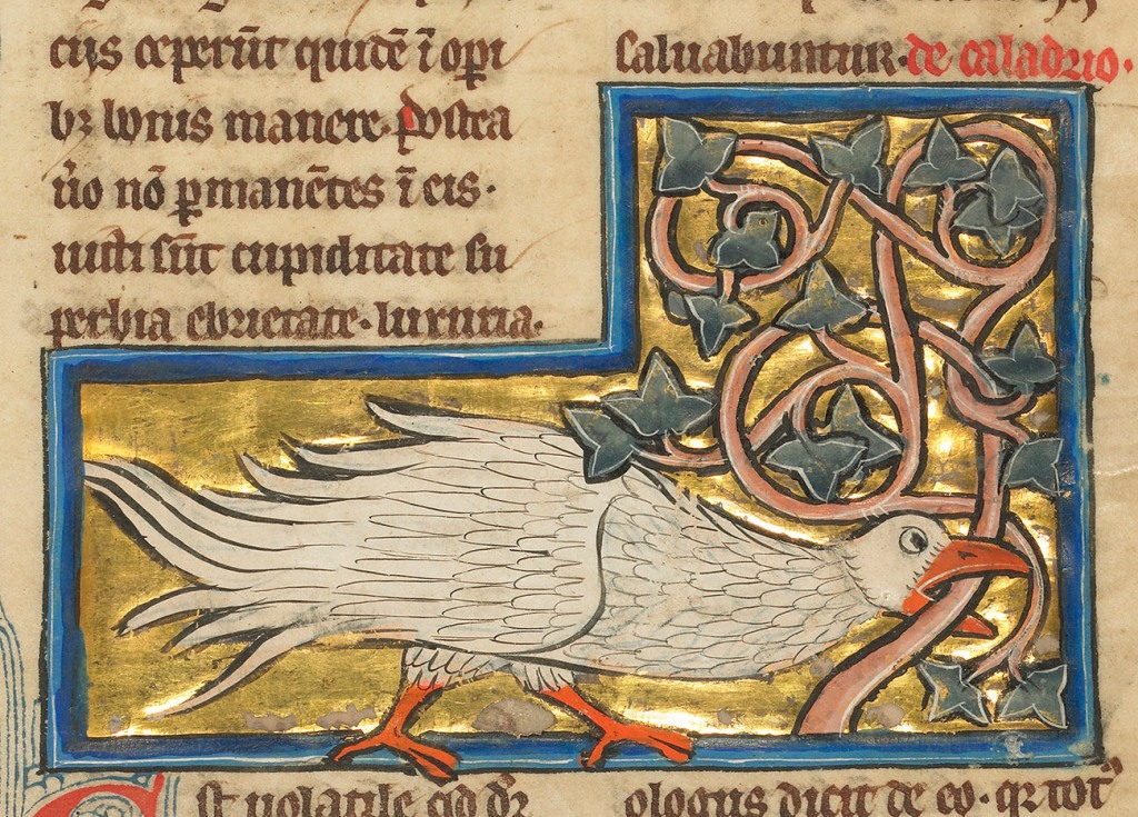 Medieval manuscript image of a white bird gnawing on a vine.