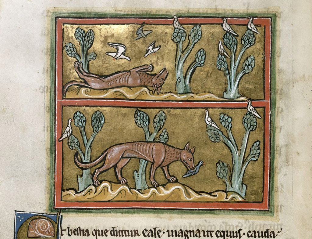 Medieval manuscript illustration of a fox playing dead with birds flying down around it, followed by a second panel with the fox on its feet with a bird in its mouth.