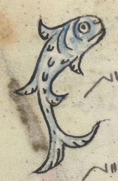 Medieval manuscript image of a fish.