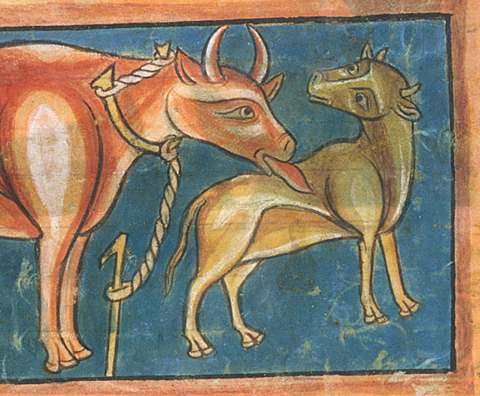 Medieval manuscript image of a mother cow licking the back of her calf who looks at her lovingly.