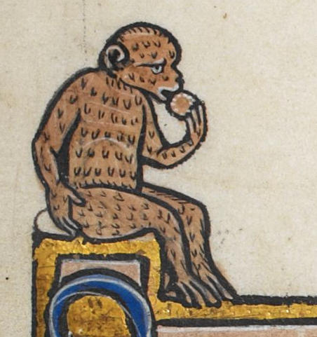Medieval manuscript image of a monkey with a sad expression sitting and eating a biscuit or wafer.