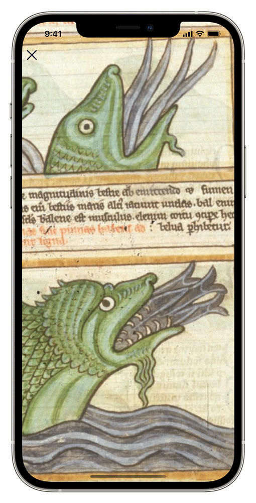 iPhone showing a fullscreen manuscript image with some text and two whales with several large fish in their mouths.