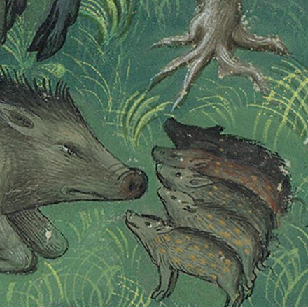 Medieval manuscript image of a mama boar crouching down in the grass, looking at her five babies who look back at her.