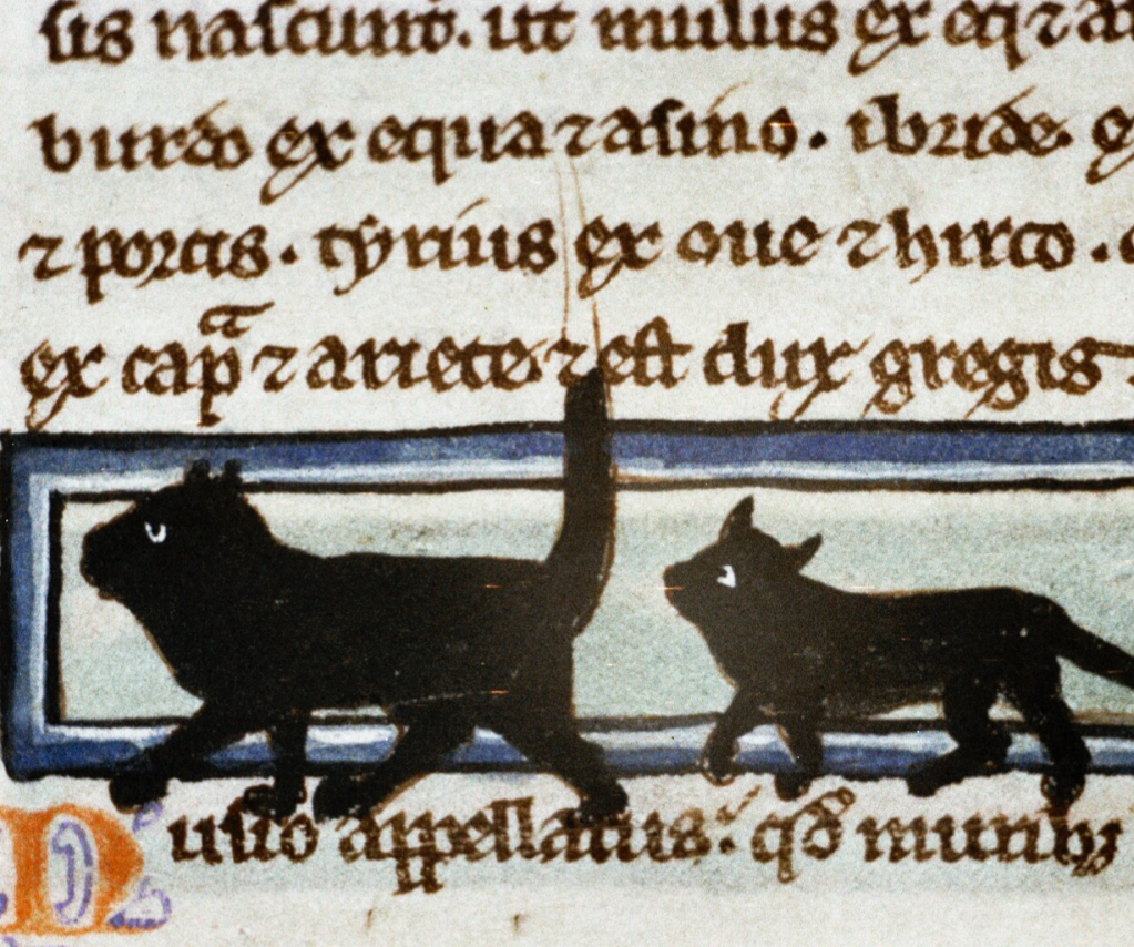 Medieval manuscript with Latin writing and two black cats walking across a blue inset rectangle; the first cat's tail extends straight up into the text, and both cats' paws descend into the text below.